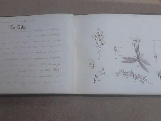 Notes on Botany 1873, Sophia B Douglas