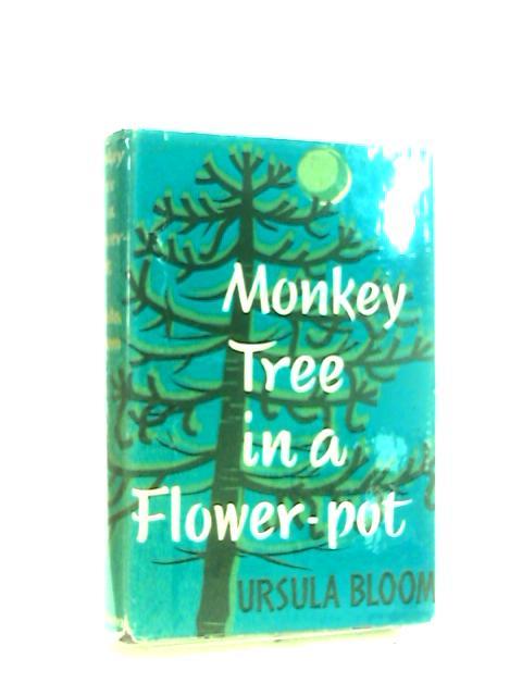 Monkey tree in a flower pot by Ursula Bloom