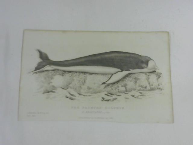 The Fronted Dolphin by C. Hamilton Smith