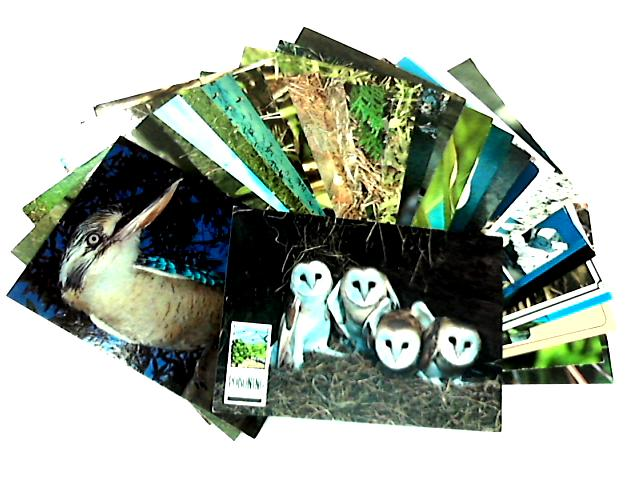 A Selection of 30 Bird Postcards by NA