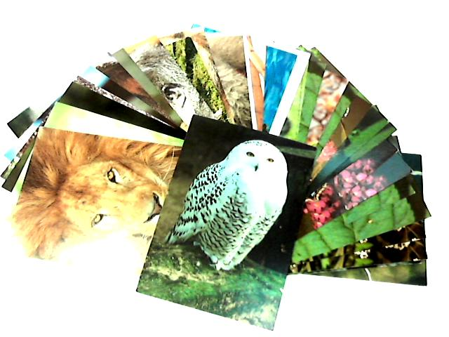 30 Animal Postcards by NA