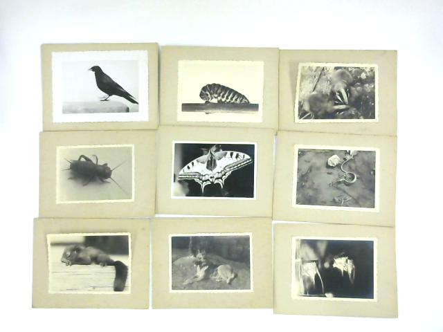 B&W Animals Pictures By NA