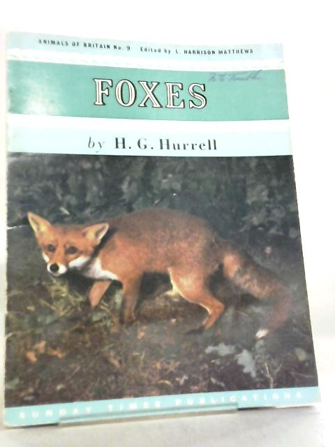 Foxes Animals of Britain No 9 by H. G. Hurrell