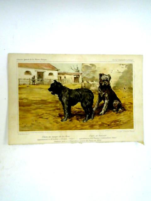 Canine Scene: Colour Chromolithographic Book Plate By G. Severeyns