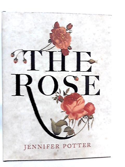 The Rose by Jennifer Potter