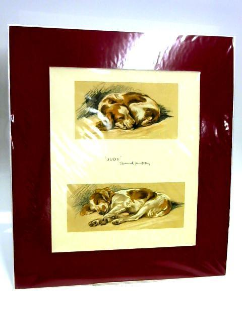 "Print of a Dog: '""Judy"" - Spaniel Puppy' by Unknown"