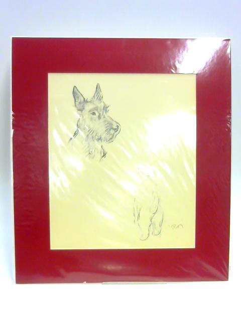 """Print of a Dog: """"Roy"""" by Lucy Dawson"""