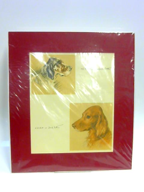 "Print of Two Dogs: ""Mercia"" and ""Susan"" by Lucy Dawson"