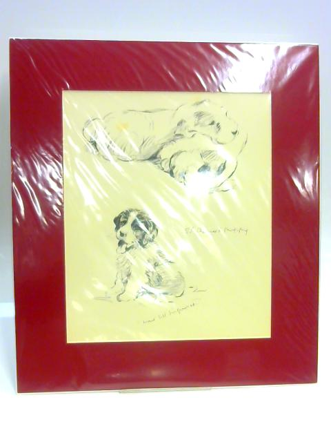 Print of a Dog: 'St Bernard Puppy' by Lucy Dawson