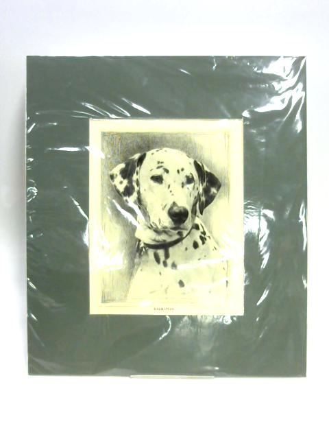 Print of a Dalmatian By Unknown