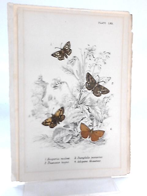 Set of 3 Plates Illustrating Butterflies By Anon