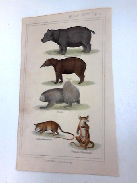 Colour plate of Mammals By Unknown