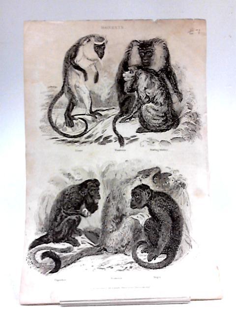 Illustration of 5 Monkeys By Unknown