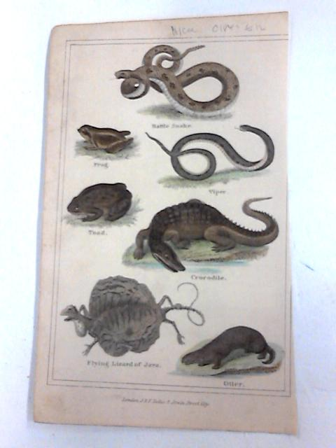 Colour plate of Snake and others. By u