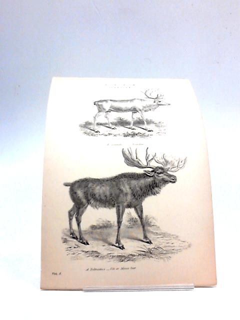 Illustration of Deers By Unknown