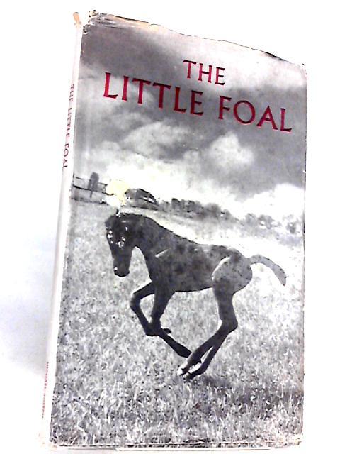 Little Foal By Hartmann, John
