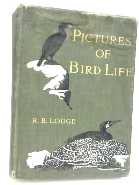 Pictures of Bird Life on Woodland, Meadow, Mountain and Marsh by R. B. Lodge