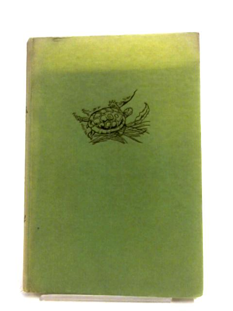 The January Tortoise by K. F. Barker