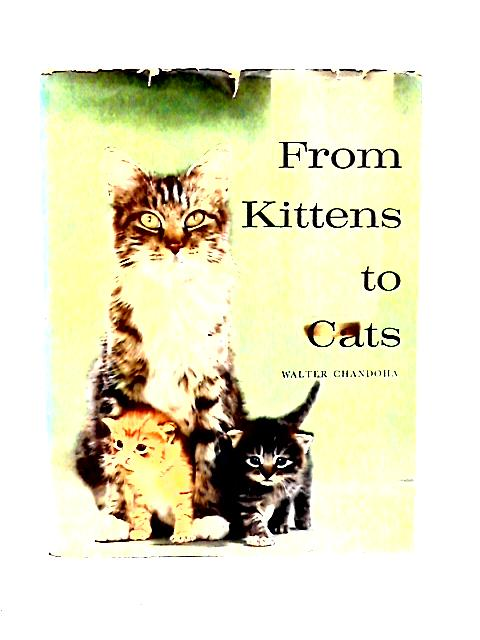 From Kittens to Cats By Walter Chandoha